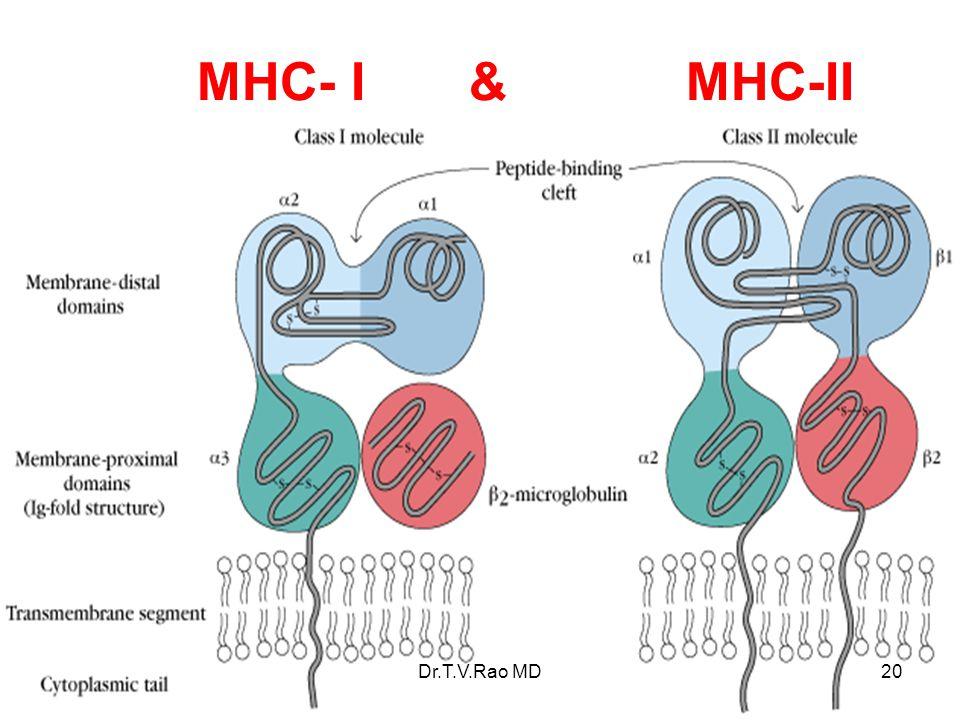 MHC- I & MHC-II Dr.T.V.Rao MD