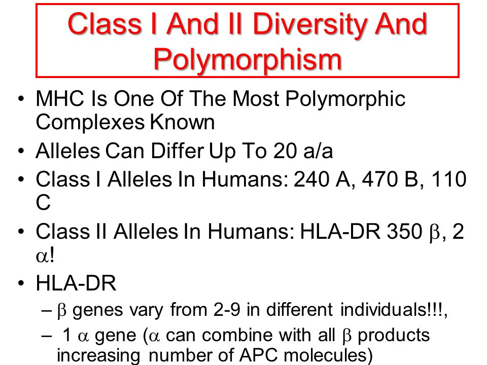 Class I And II Diversity And Polymorphism