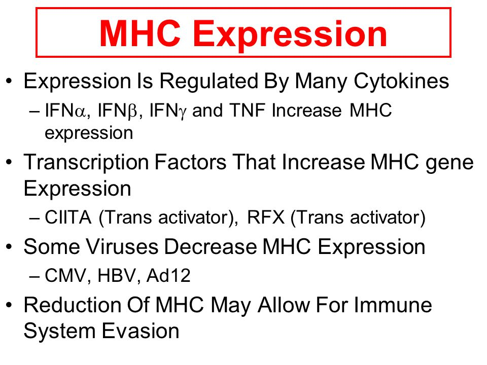 MHC Expression Expression Is Regulated By Many Cytokines