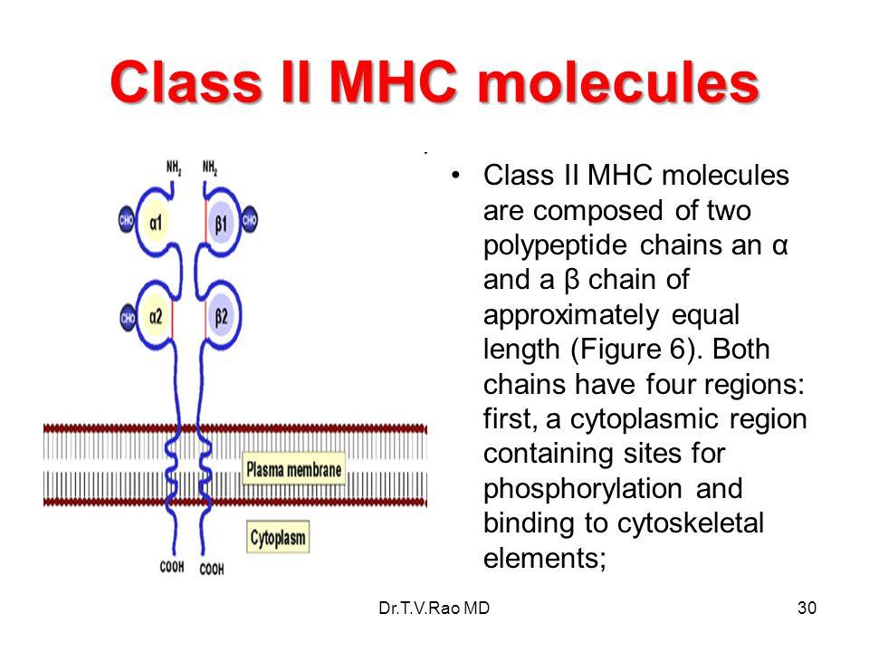 Class II MHC molecules