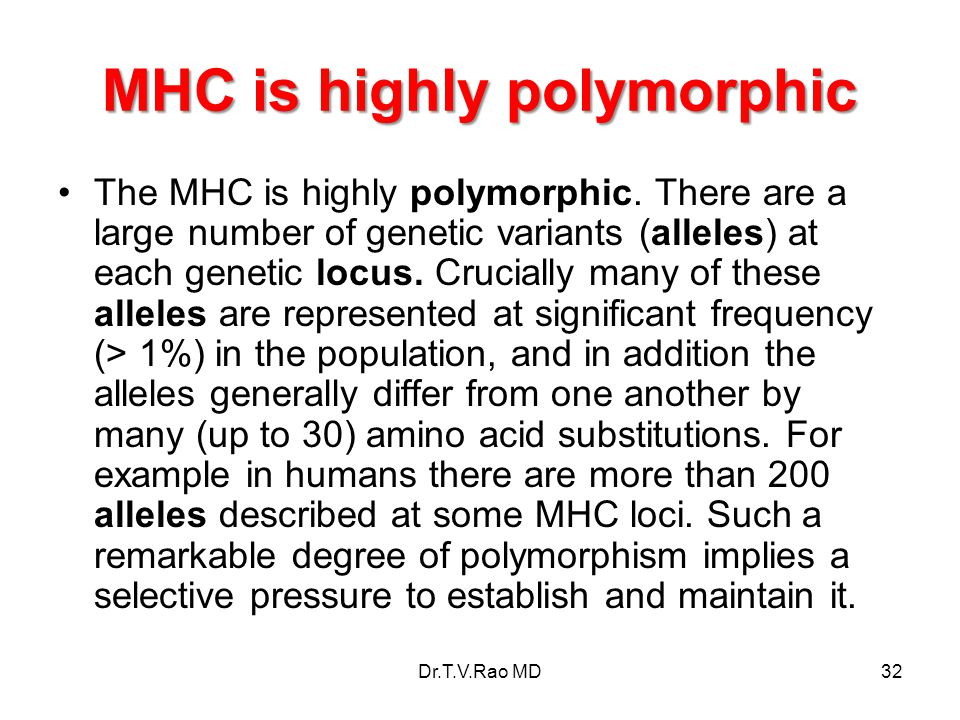 MHC is highly polymorphic