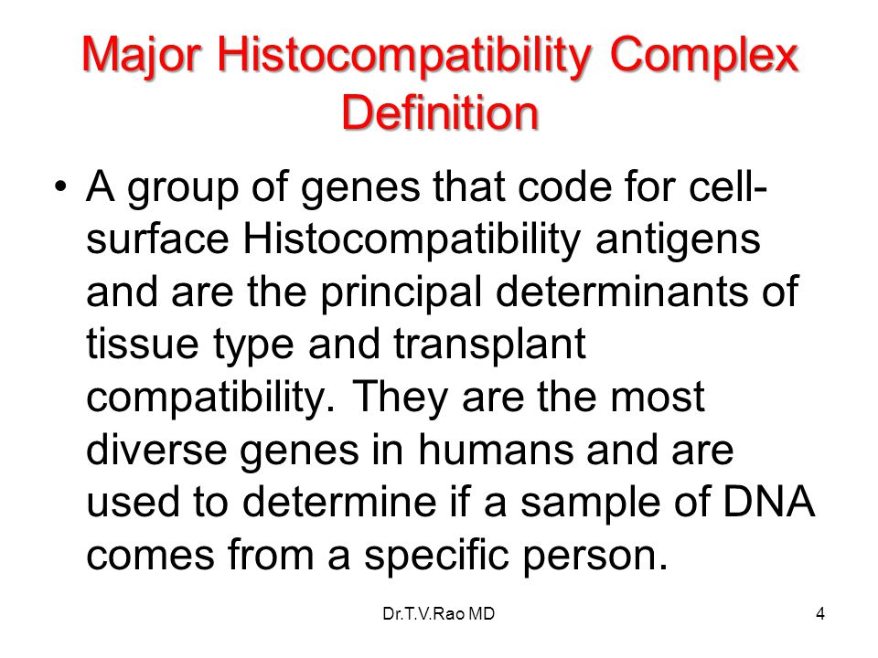 Major Histocompatibility Complex Definition