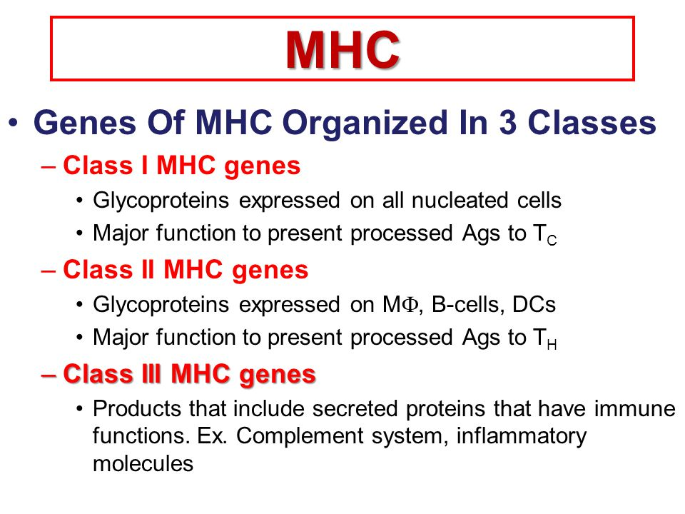 MHC Genes Of MHC Organized In 3 Classes Class I MHC genes