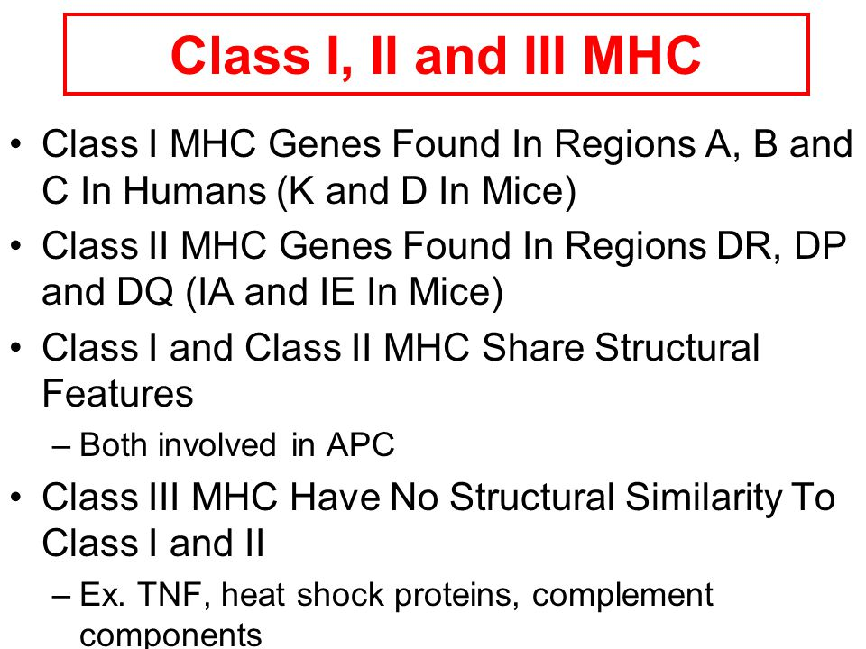 Class I, II and III MHC Class I MHC Genes Found In Regions A, B and C In Humans (K and D In Mice)