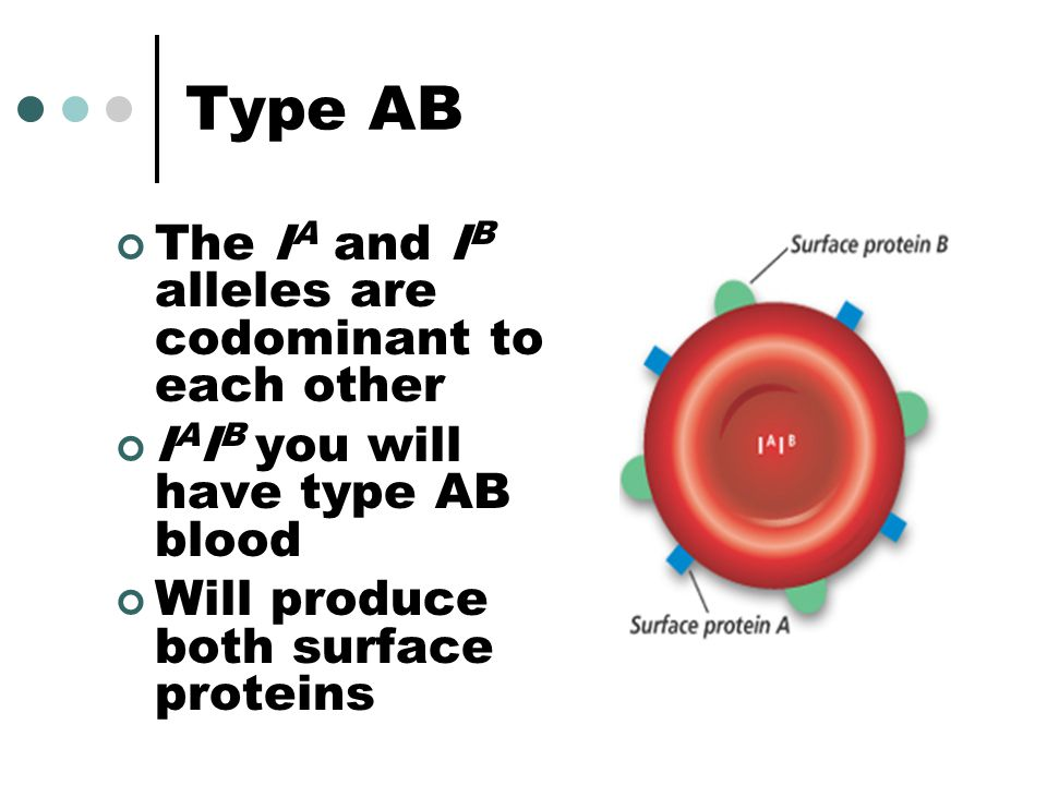 Type AB The IA and IB alleles are codominant to each other