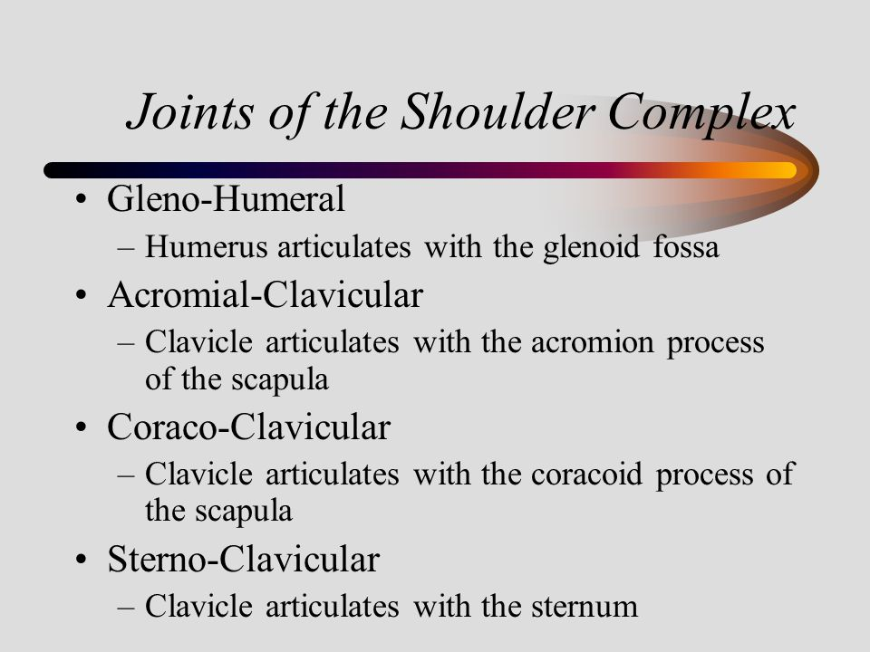 Joints of the Shoulder Complex