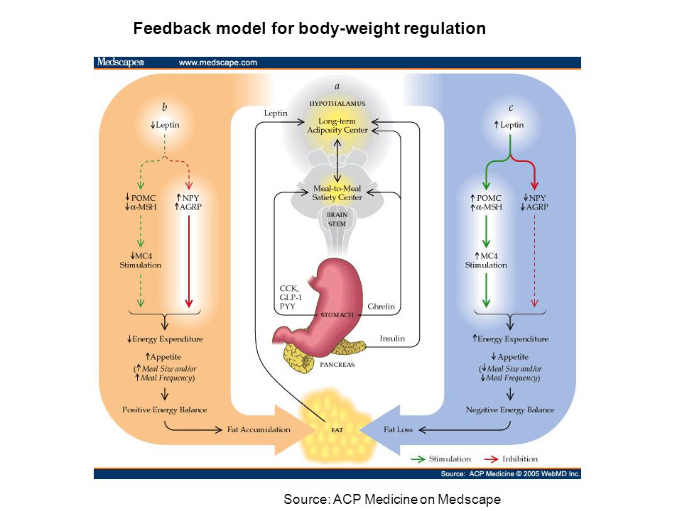 Feedback model for body-weight regulation