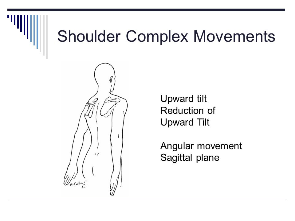 Shoulder Complex Movements