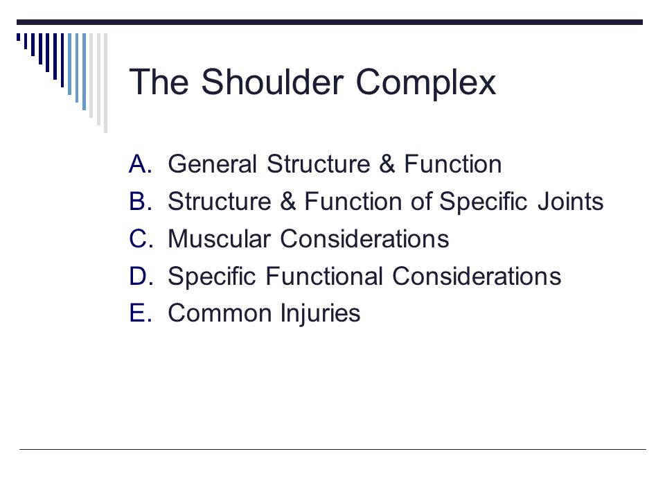 The Shoulder Complex General Structure & Function