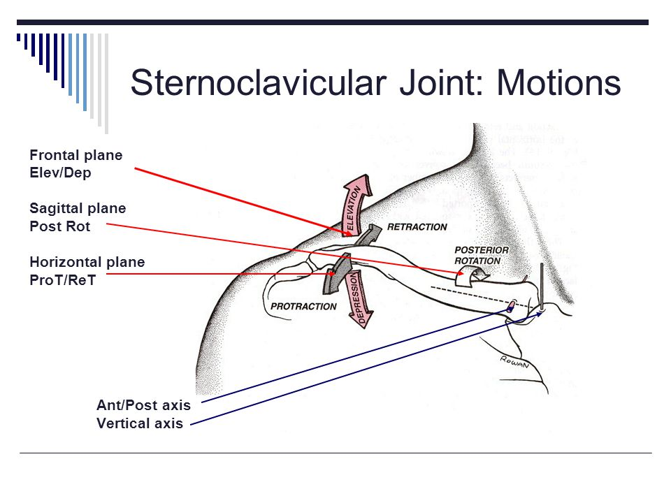 Sternoclavicular Joint: Motions
