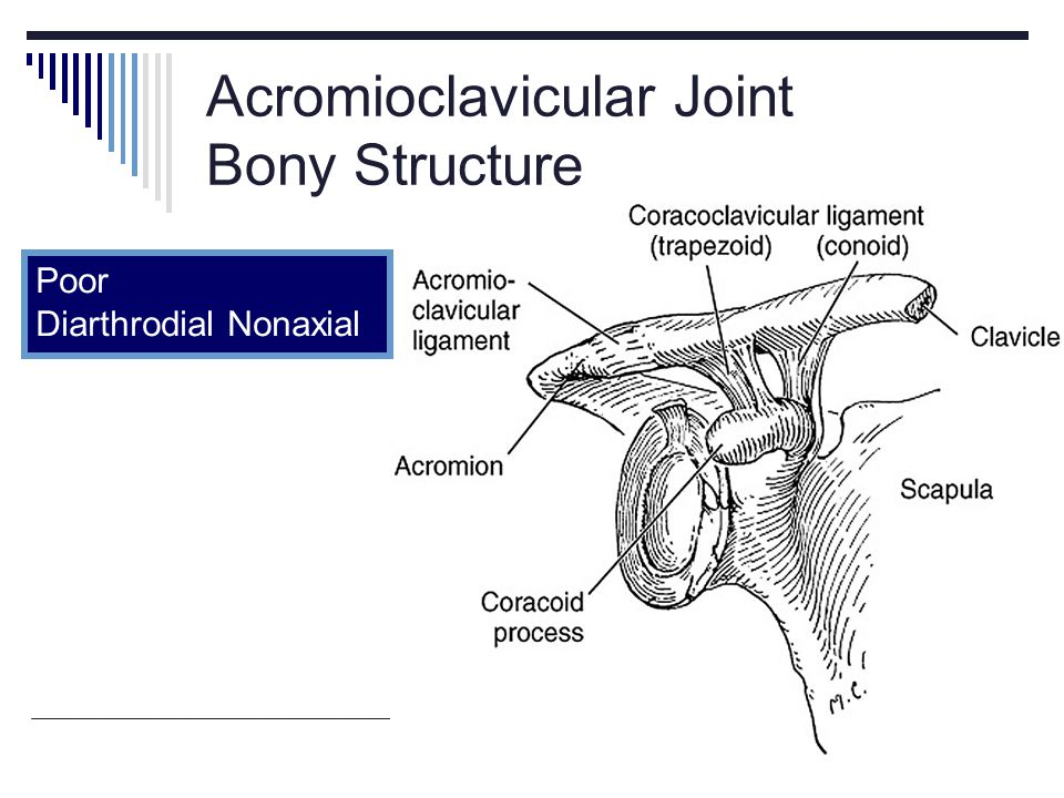 Acromioclavicular Joint Bony Structure