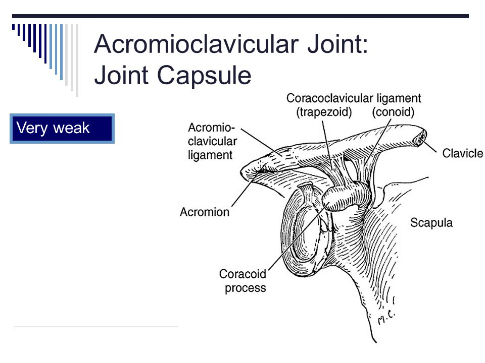 Acromioclavicular Joint: Joint Capsule