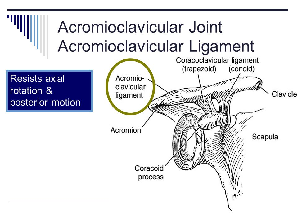 Acromioclavicular Joint Acromioclavicular Ligament