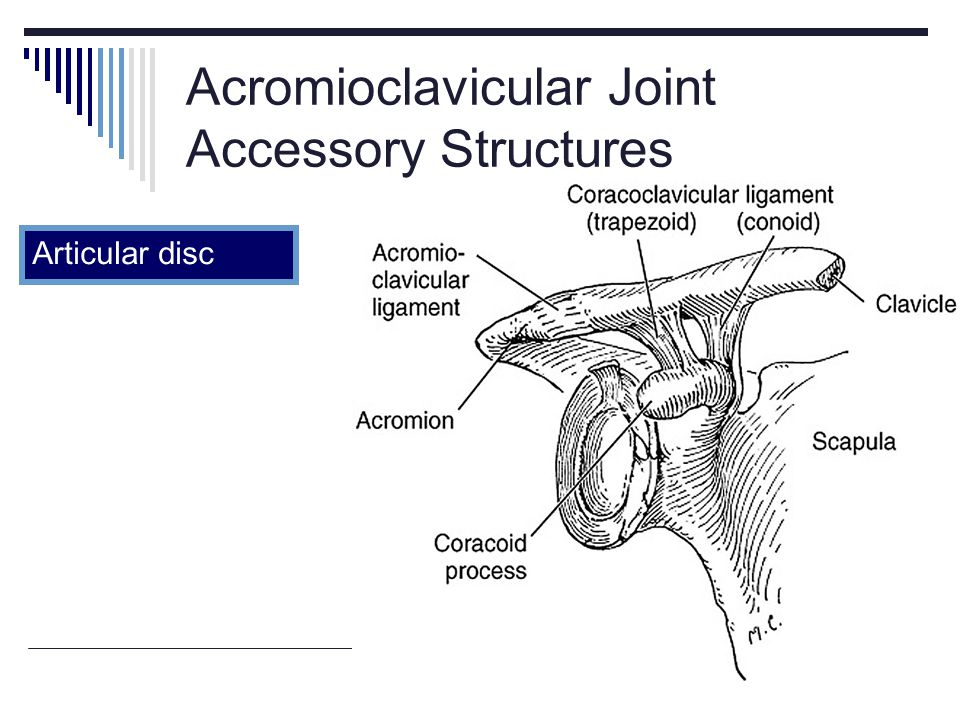 Acromioclavicular Joint Accessory Structures
