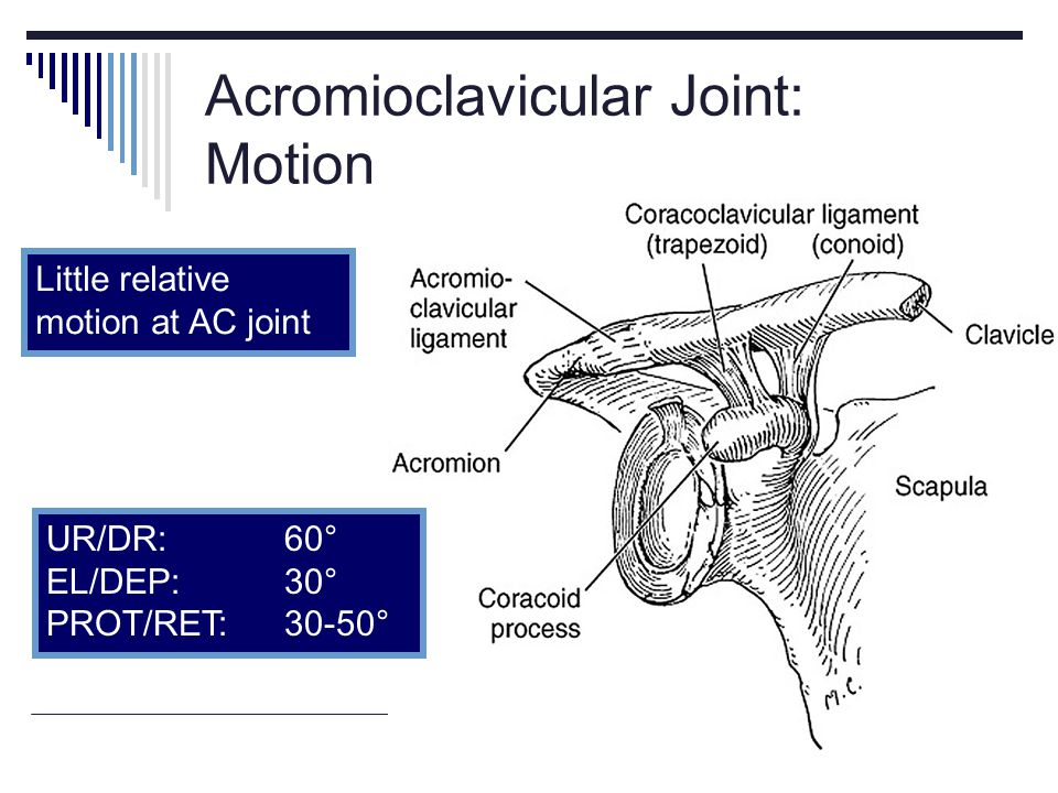Acromioclavicular Joint: Motion
