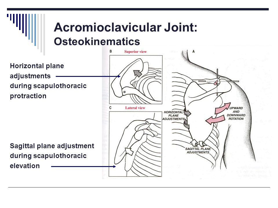 Acromioclavicular Joint: Osteokinematics