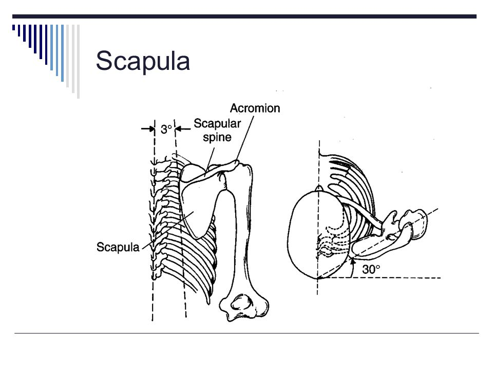 Scapula Region between the anterior scapula and thoracic wall.