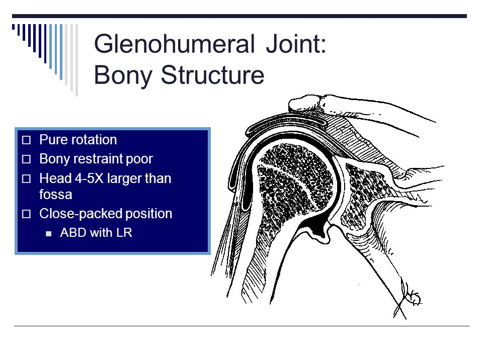 Glenohumeral Joint: Bony Structure