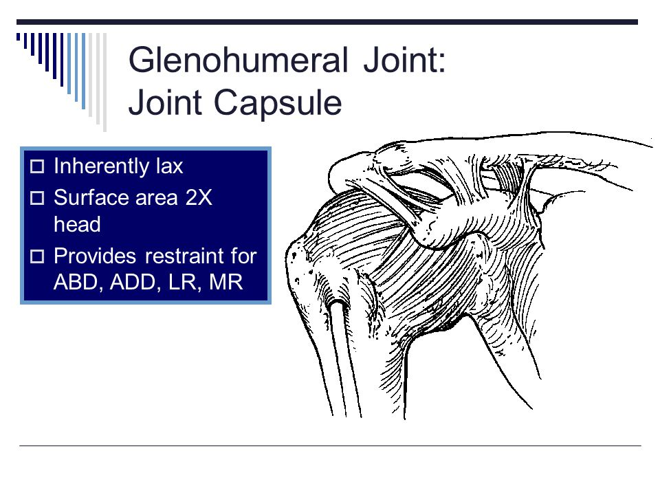 Glenohumeral Joint: Joint Capsule