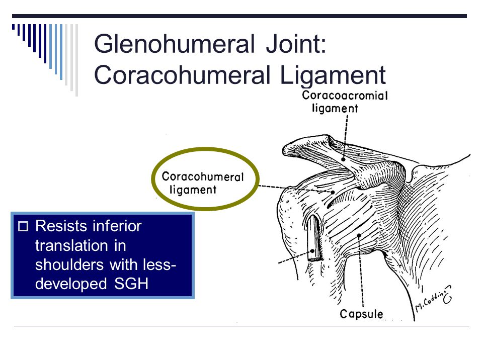 Glenohumeral Joint: Coracohumeral Ligament