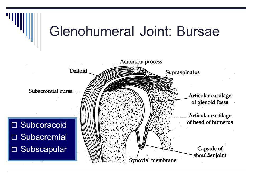 Glenohumeral Joint: Bursae