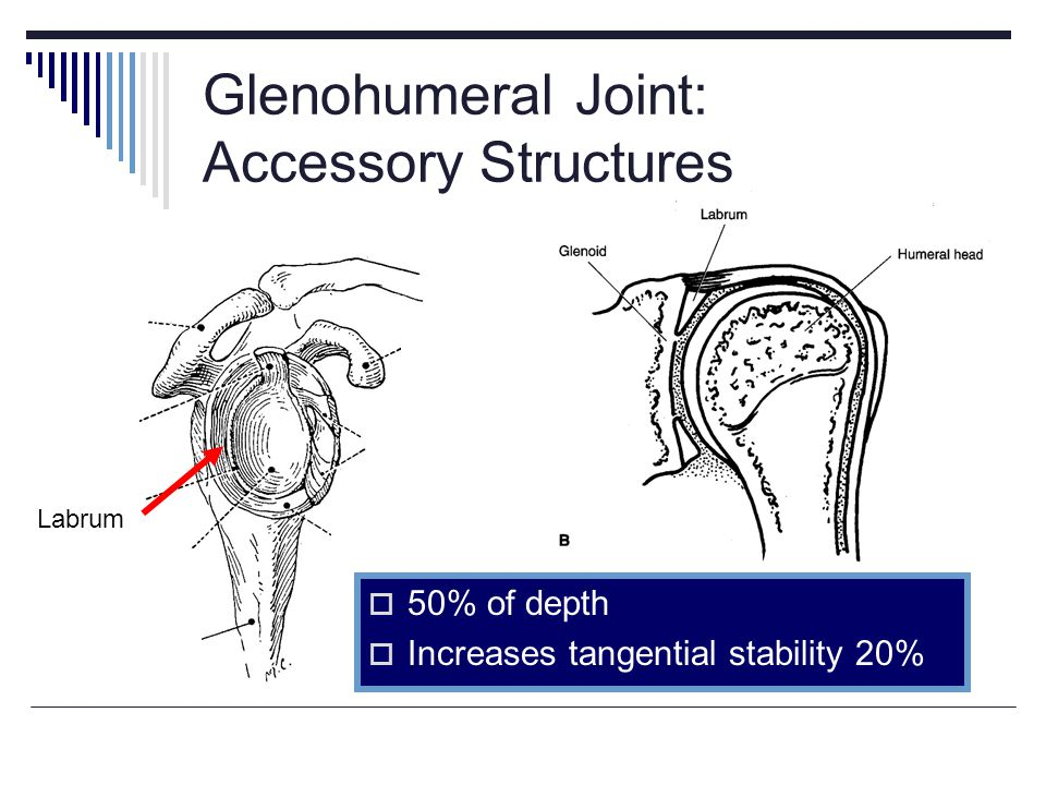 Glenohumeral Joint: Accessory Structures