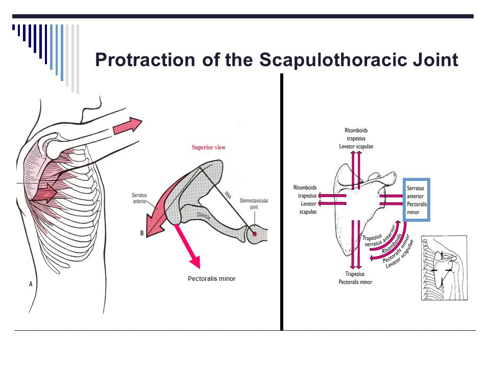 Protraction of the Scapulothoracic Joint