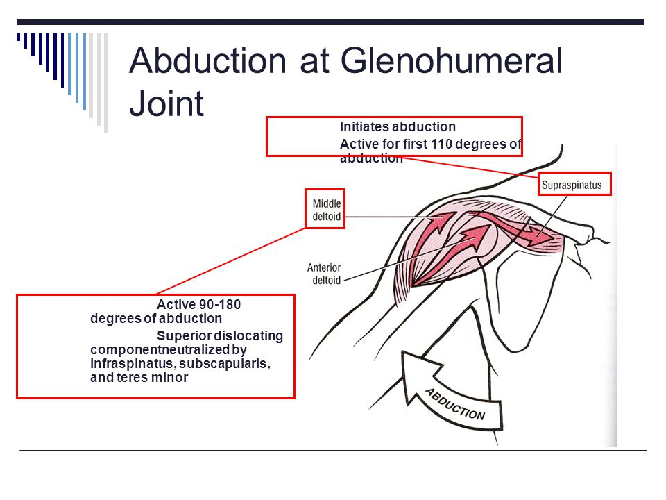 Abduction at Glenohumeral Joint
