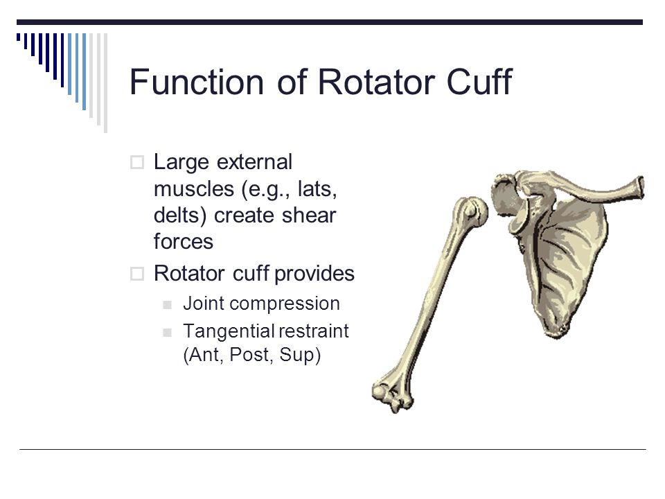 Function of Rotator Cuff