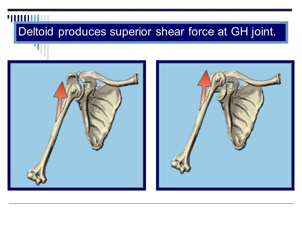 Deltoid produces superior shear force at GH joint.