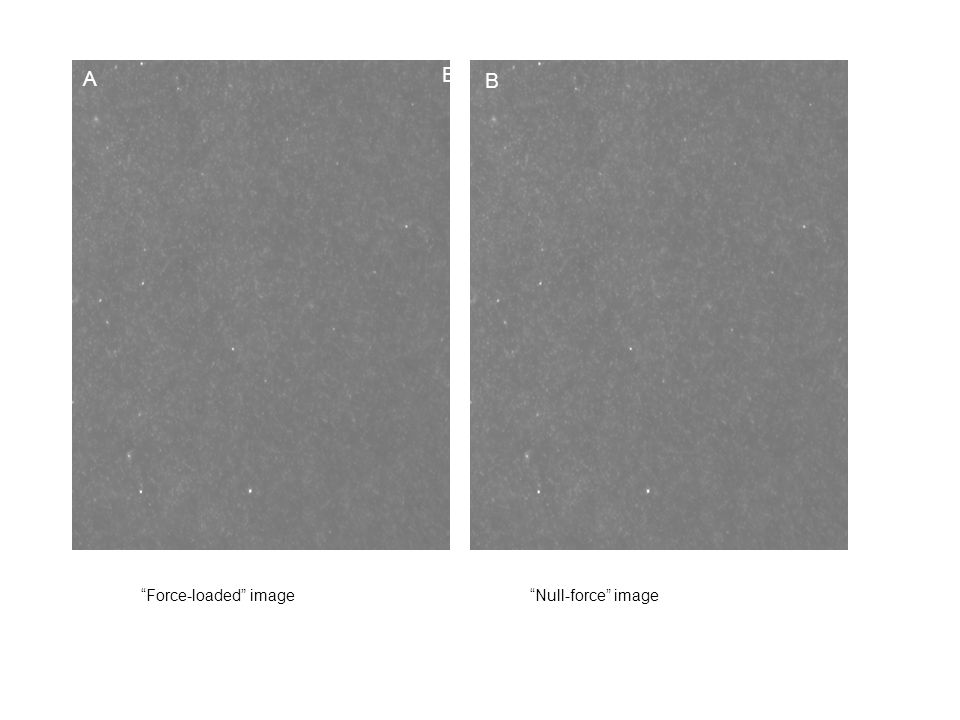 A B Force-loaded image Null-force image