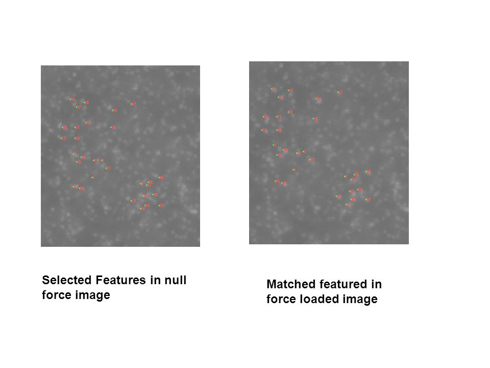 Selected Features in null force image