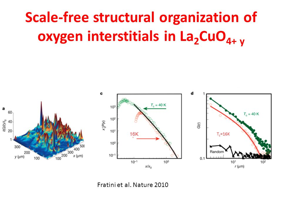 Scale-free structural organization of oxygen interstitials in La2CuO4+ y