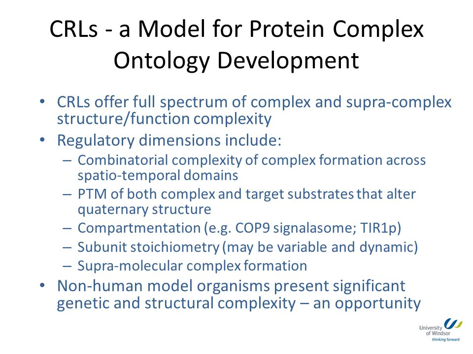 CRLs - a Model for Protein Complex Ontology Development