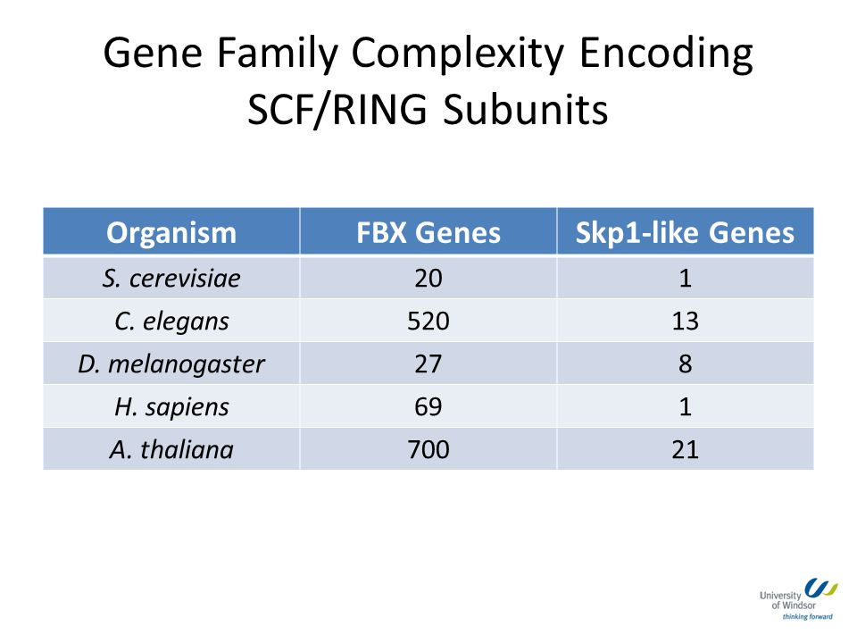 Gene Family Complexity Encoding SCF/RING Subunits