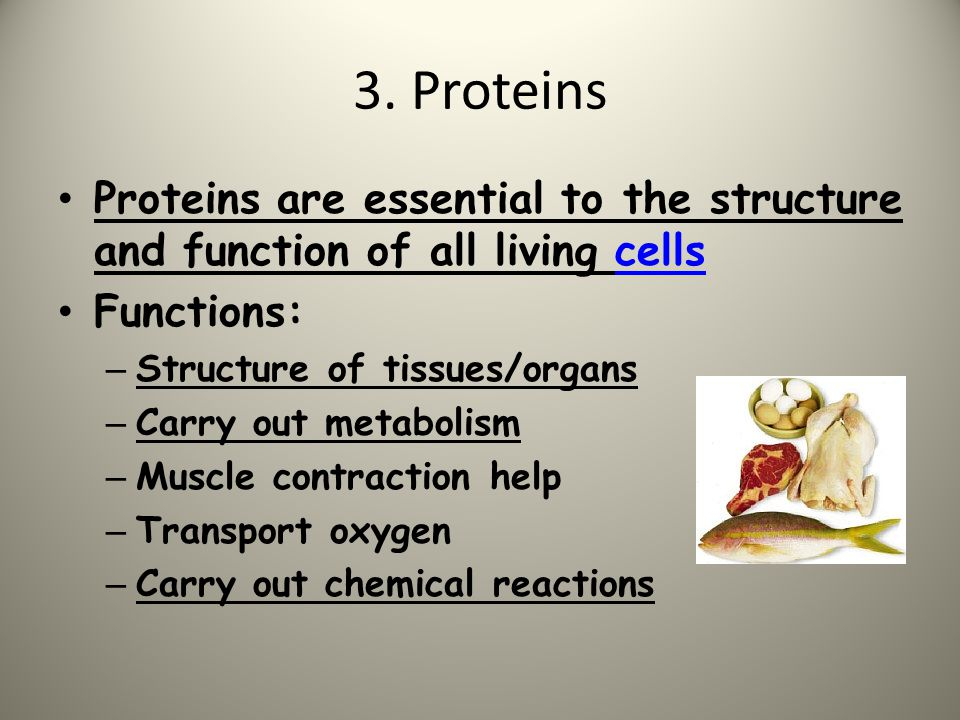 3. Proteins Proteins are essential to the structure and function of all living cells. Functions: Structure of tissues/organs.