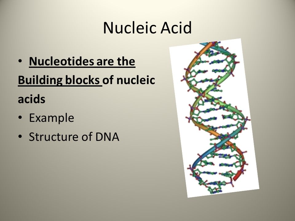 Nucleic Acid Nucleotides are the Building blocks of nucleic acids