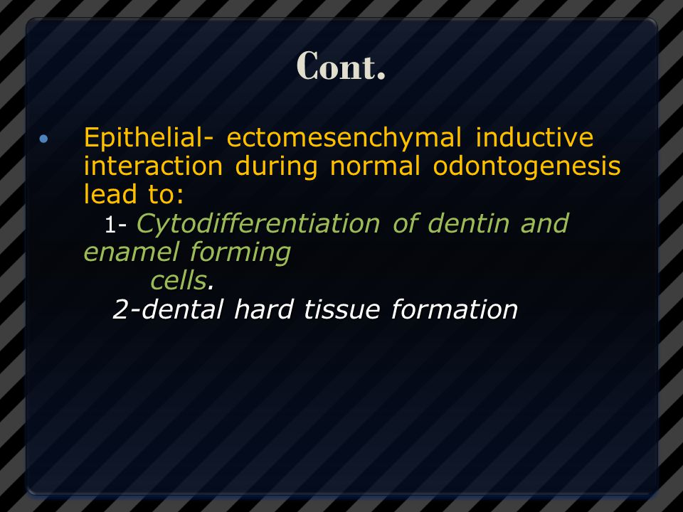 Cont. Epithelial- ectomesenchymal inductive interaction during normal odontogenesis lead to: 1- Cytodifferentiation of dentin and enamel forming.