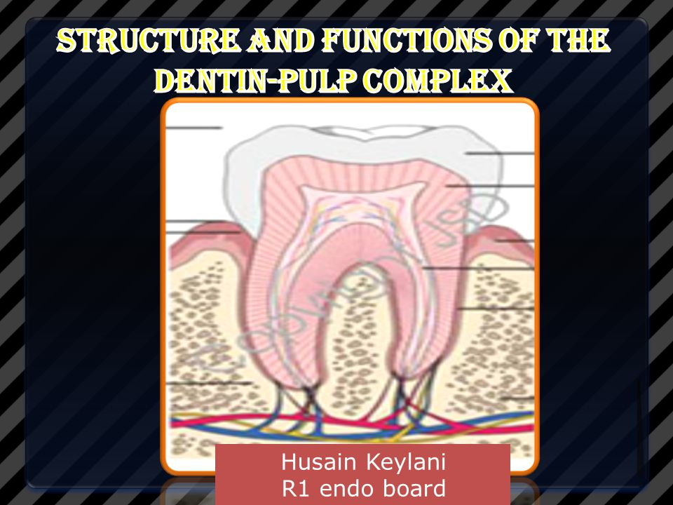 Structure and Functions of the Dentin-Pulp Complex