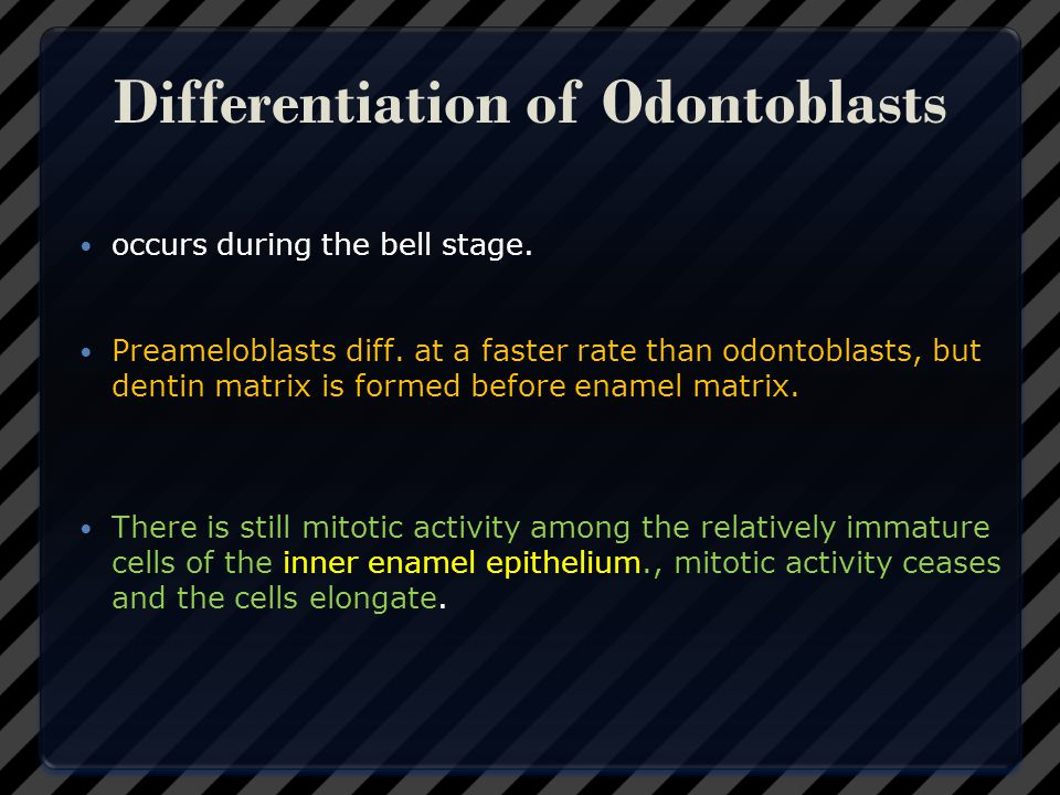 Differentiation of Odontoblasts