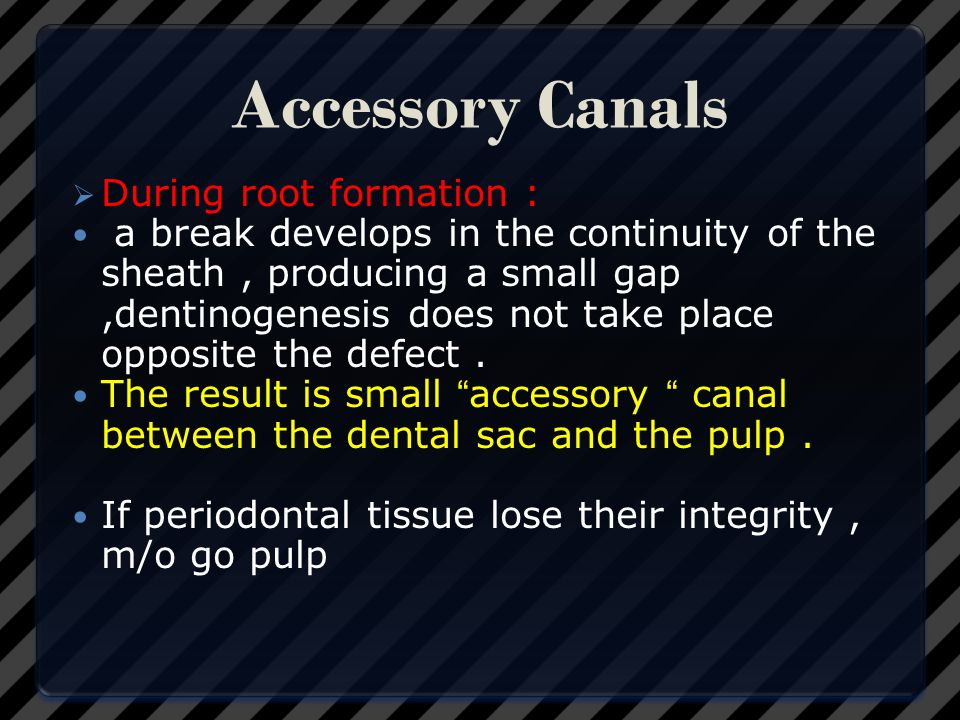Accessory Canals During root formation :