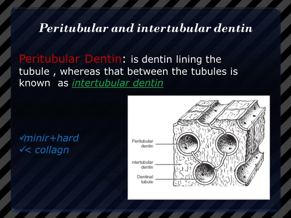 Peritubular and intertubular dentin