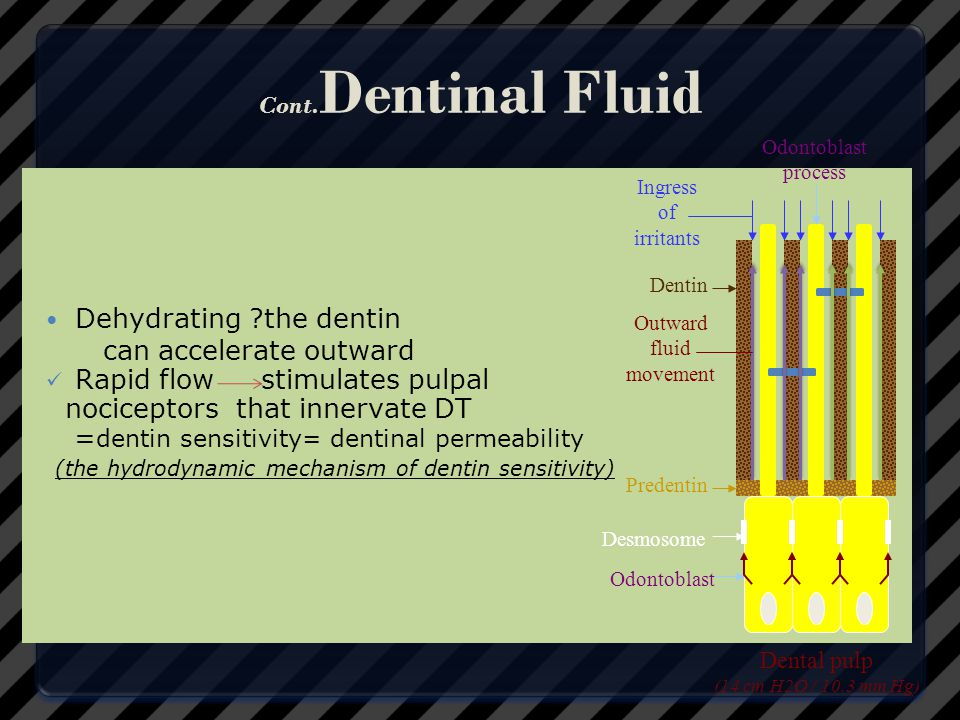 Dehydrating the dentin can accelerate outward