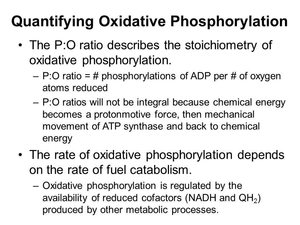 Quantifying Oxidative Phosphorylation