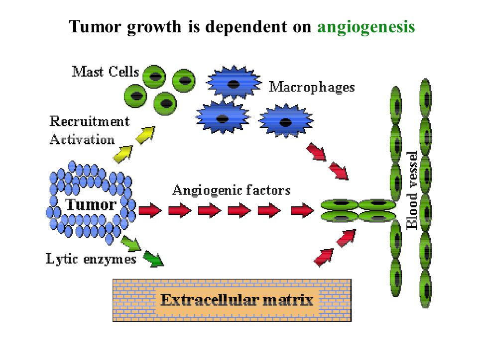 Tumor growth is dependent on angiogenesis