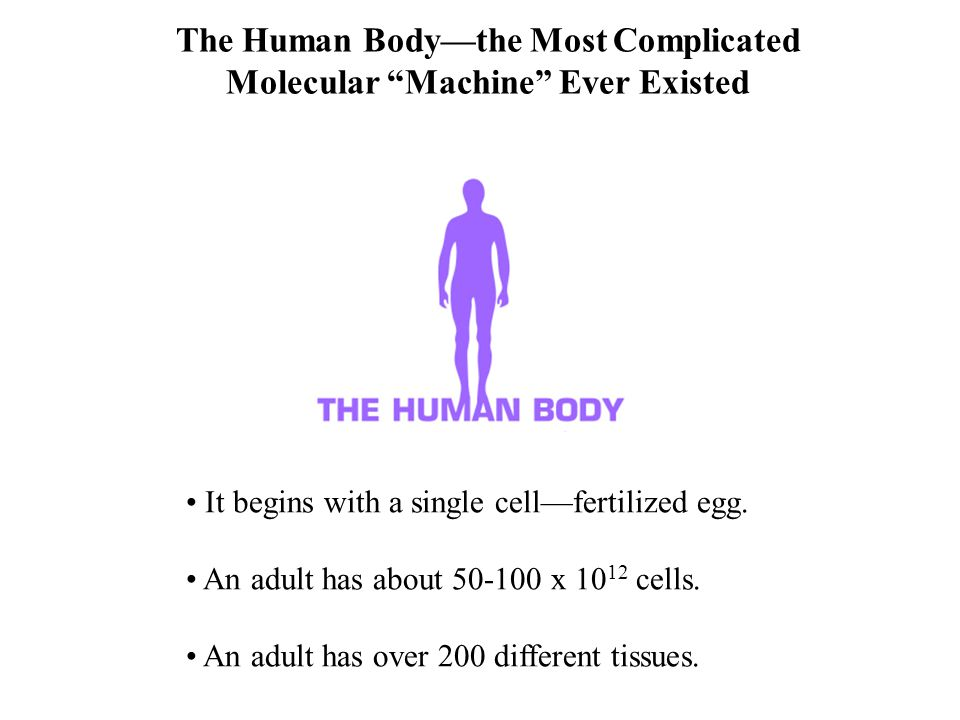 The Human Body—the Most Complicated Molecular Machine Ever Existed