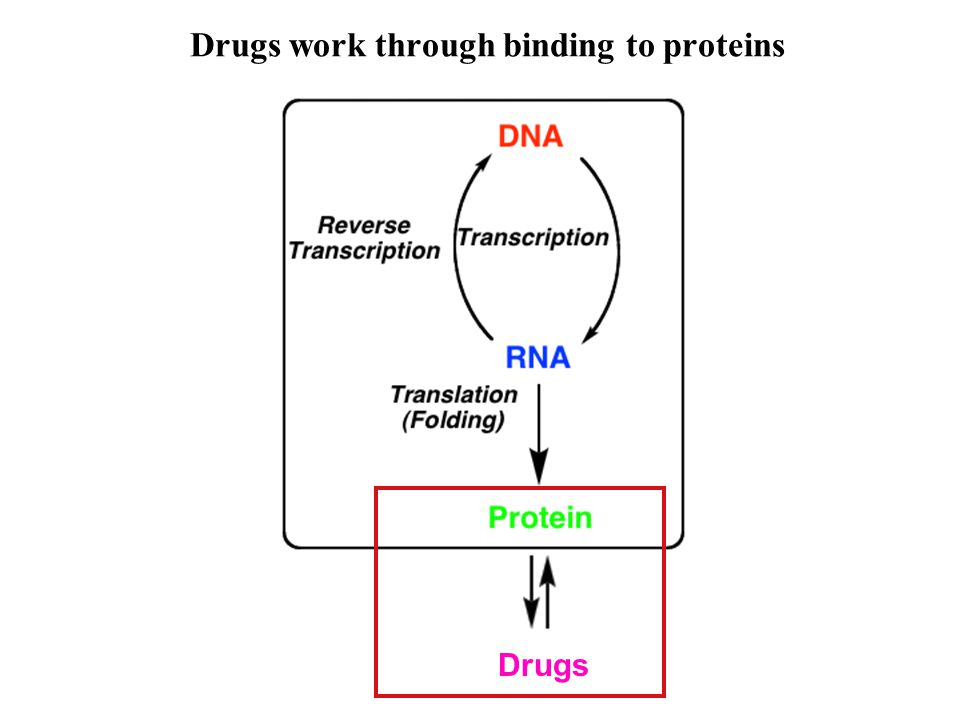 Drugs work through binding to proteins