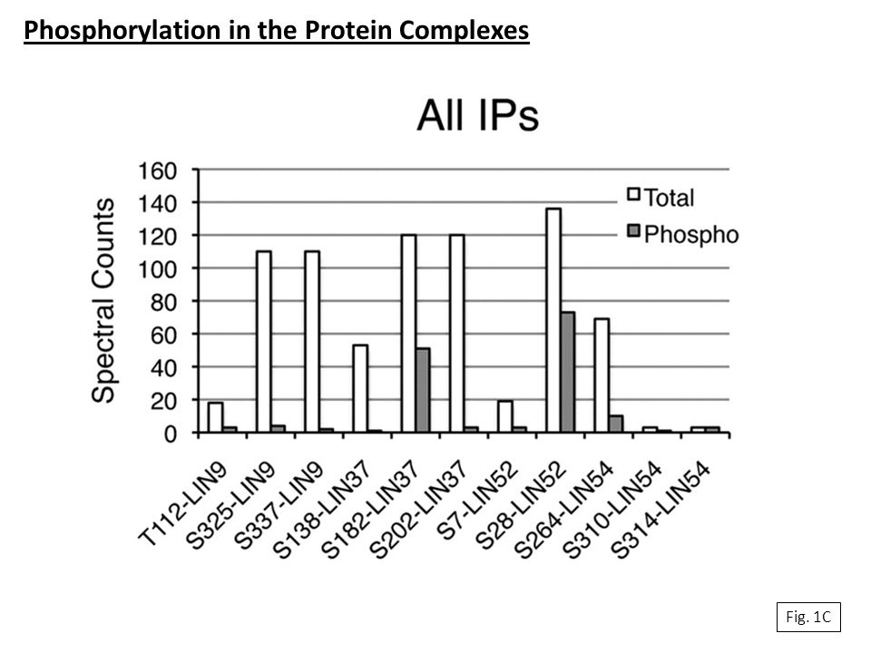 Phosphorylation in the Protein Complexes