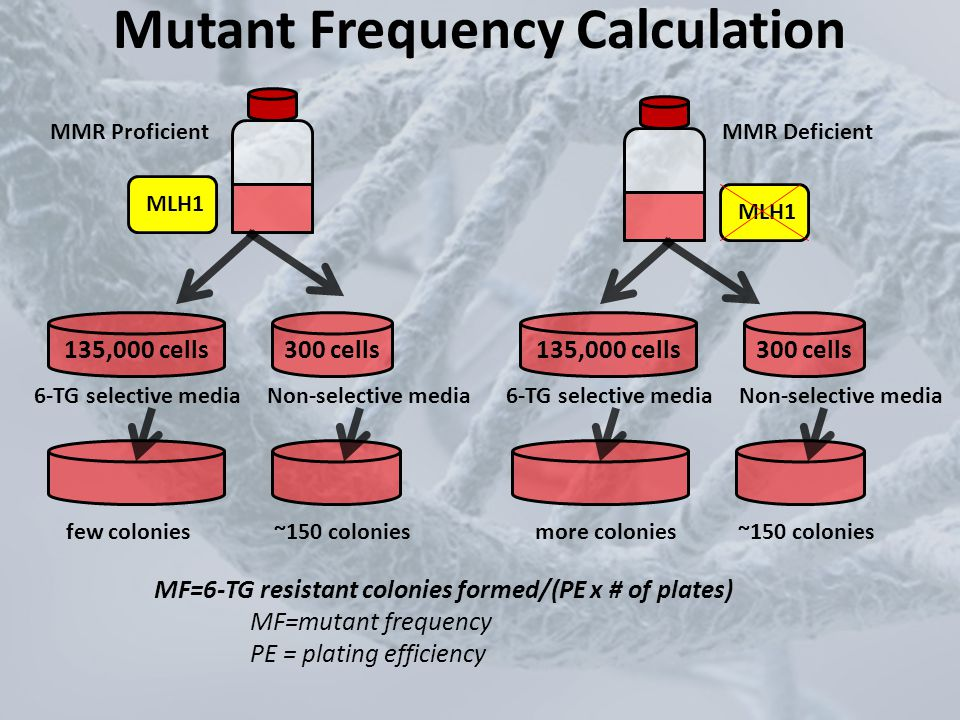 Mutant Frequency Calculation