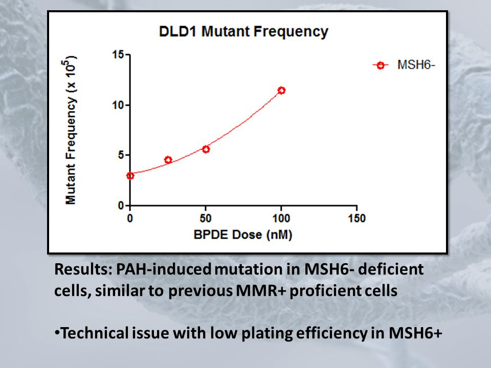 Results: PAH-induced mutation in MSH6- deficient cells, similar to previous MMR+ proficient cells
